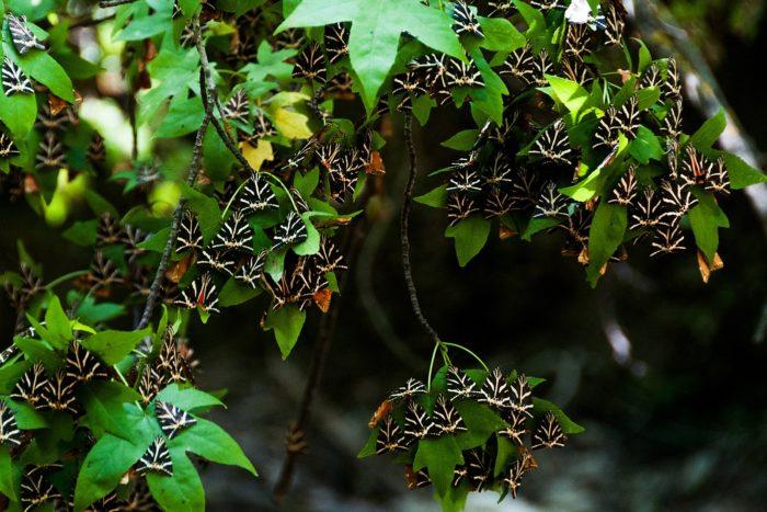 Петалудес - Долина бабочек